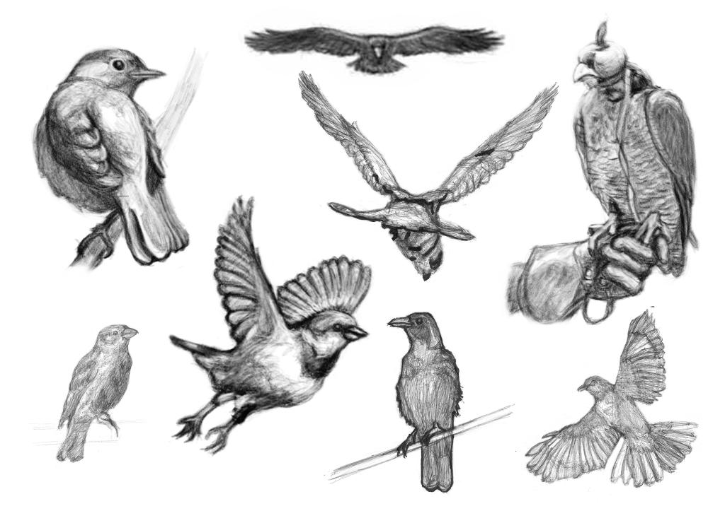 Pájaros de El Trofeo